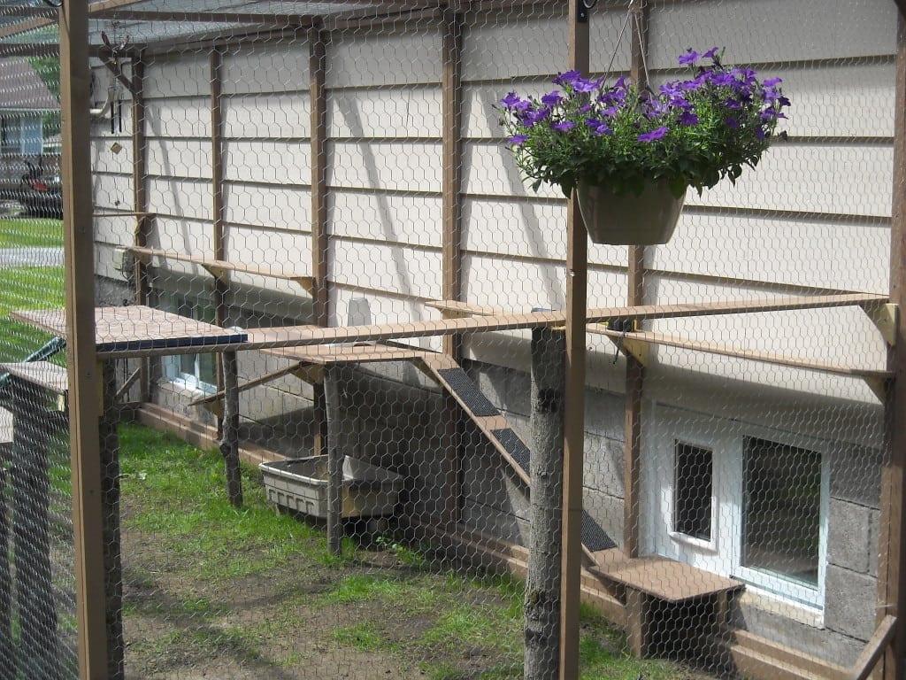 Chicken Wire Cat Enclosure Chicken Wire Catio More Cat