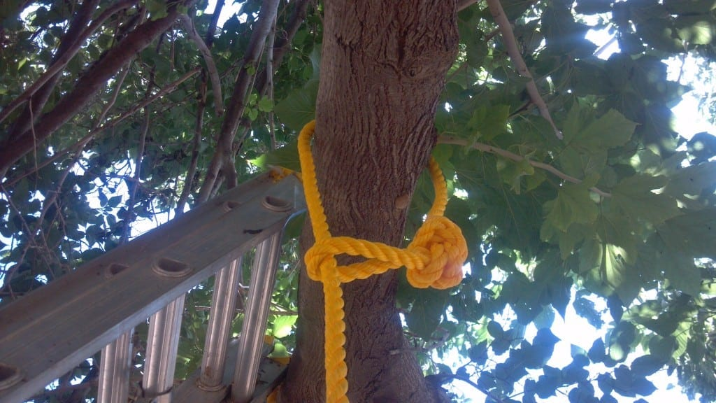 How To Build A One Rope Tree Swing Teediddlydeeteediddlydee