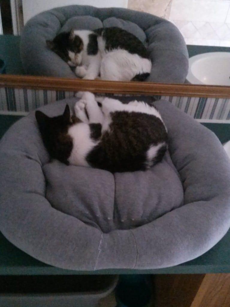 Diy Sweatshirt Or Sweater Pet Bed Teediddlydee